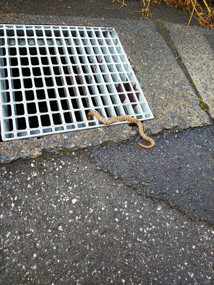 この蛇の種類を教えて下さい。