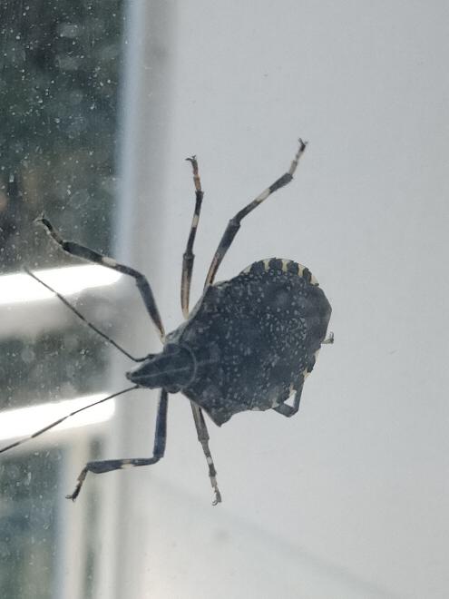 この虫何者ですかね?ベランダによく居るのですが。。。見たことない虫なので気になってます。