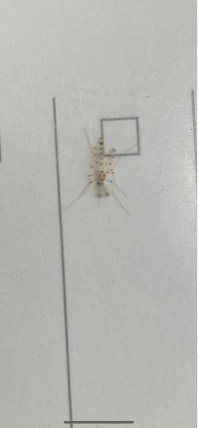 この虫の名前なんですか?
