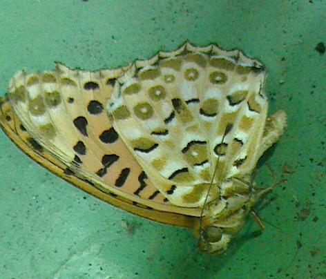 なんという名前の虫でしょうか?