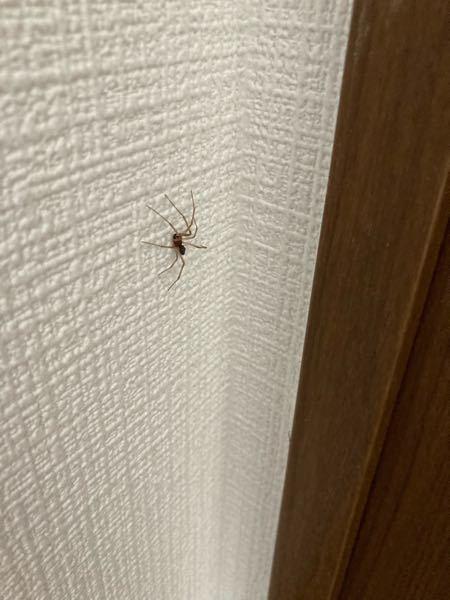 この蜘蛛の名前わかる方いらっしゃいますか?! あと、毒があるとか皮膚に悪いなど害はあるのでしょうか? お願いします!
