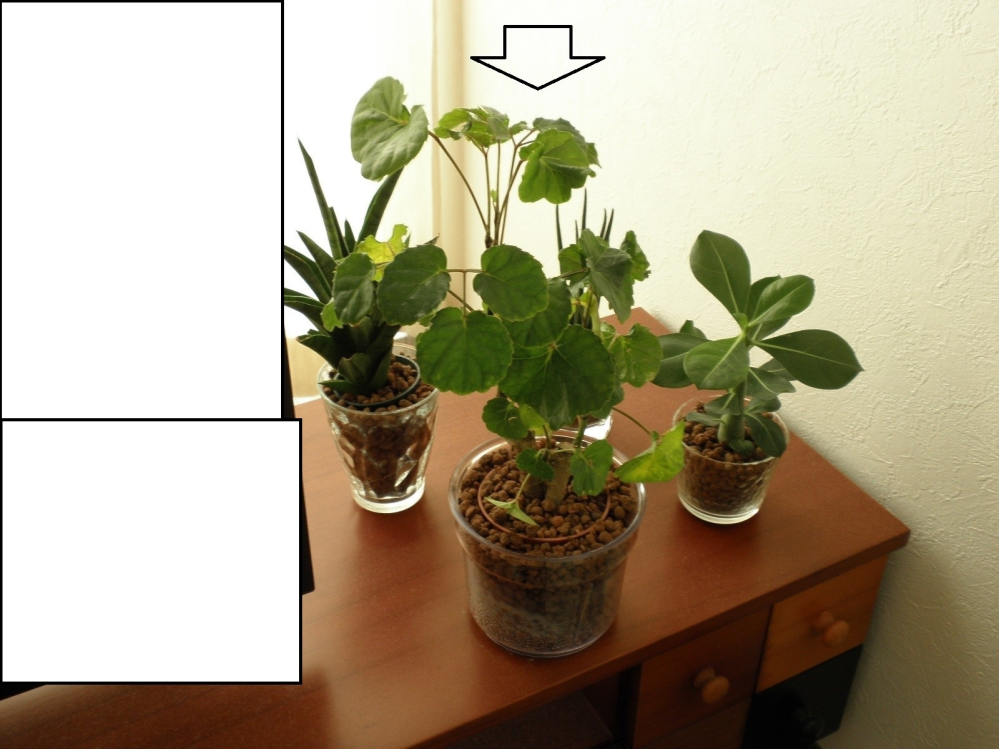 【やや急ぎ】観葉植物の名前 この写真の一番手前にある観葉植物(矢印の物)の名前が判る方居ますか?教えて下さい。また、お時間があれば、育て方・適してる環境とかも教えて頂けると幸いです。 他の観葉植...