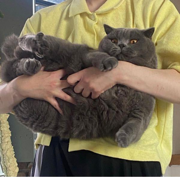 この猫なんてゆう種類か教えてください 出来ればお値段も知りたいです