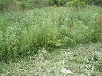 耐寒性のあるグラウンドカバーについて教えてください。  道東の釧路湿原近くに300坪弱の土地を所有していますが別荘地として使用しているので雑草対策のためグラウンドカバーになる植物を植えようと思います。 年に数回訪れますがそのたびに写真の様な状態で悩んでいます。(1日は草刈りで終わります) 特にガーデニング(庭造り)の様なことは予定していません。そのまま広い空き地として使用したいと思いま...