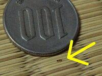 アリ?極小のアリのような生き物が部屋の中にいます。 昆虫に詳しい方、教えてください。 偶然部屋の中でものすごく小さな生き物を見つけたのですがアリなのでしょうか? 1mmよりも遥かに小さく普通は指摘され...