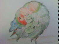 インコの毛づくろいを見たことがある人は答えてほしいです。  インコが毛づくろいしてるところを描きたいのですが、イマイチ動きが出ません。   インコの動きはもっとこうだ!とか、教えてほしいです。  鳥カテゴ...
