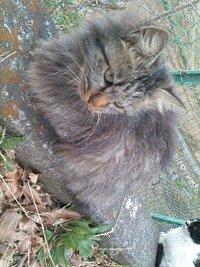 こういう猫は寒さに強いのでしょうか?