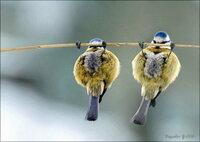 可愛い鳥ですね^^これはなんという鳥でしょうか?^^ さっきは画像を張り間違えました!