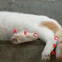〜結局〜ネコの後足のかかとってどこなんですか?