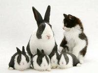 ネコちゃん☆ウサギになりたいのですか?
