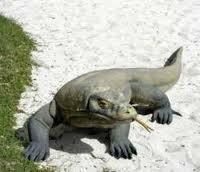 めちゃ大きなトカゲを捕まえました。下に写真を示します。 一体これは何でしょうか?教えて下さい。あまりにでかすぎです。