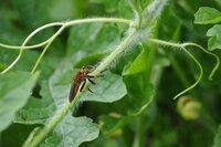 アブ?ハチ? この昆虫の名前を教えて下さい。 昆虫には詳しくないのでサッパリわかりません。 宜しくお願い致します。