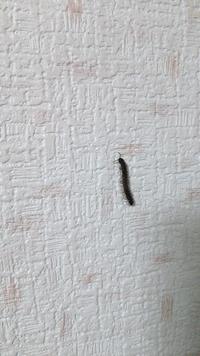 閲覧注意 ヤスデ?ムカデ?  最近引っ越しました。家ノ前は一段下がって広い砂利の駐車場があります。脇に草が生えているスペースも。  さて、そんなアパートですが、虫が出ます。 今日現れた時に撮った画像を 添付しました。四月からこれでこいつが4匹目です。 この虫はヤスデでしょうか?ゲジゲジでしょうか?ムカデ? どなたかお答えお願いします。 一応不快害虫っぽいので閲覧注意です。
