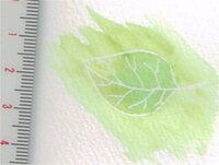 水彩の塗る残すためのマスキング液をいかに細くかけるか 只今、水彩画練習中です。  葉脈や動物のひげなど塗り残したい時がありますので マスキング液というもの使っています。  筆で描くと細くならないし、...