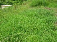 ブドウの温室跡地を譲り受けました、畑にすることを考えています、現在写真のような草が全面に生えています。 ツルハシで掘ってみると草の根は思ったより深いです。 農家ではないので農機具は持っていません。 ...