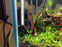 水草にこんな生き物?が大量についています。 水槽はコケを取るためにヤマトヌマエビを入れて2〜3週間ほど無灯状態です。 こいつはなんなんでしょうか? あと水草に害はありますか?