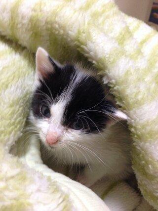 体重 子猫 2 ヶ月