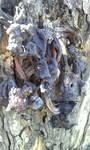 自宅裏の柿の木の下から、クワガタの幼虫みたいなのがたくさん出て来ました。 写真のようなキノコが生えてましたが、このキノコは何でしょうか? また、予想出来るクワガタの種類は何だと思いますか? 南東北在住です。