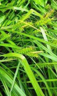 荒れ地の雑草です。 この植物の名前をおしえて下さい。