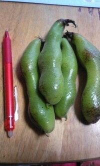 この豆の名前を教えてください こんにちは。 この大きな豆を沢山いただきましたが、 名前もレシピも全く分からず困っております(^^;) (左は大きさ比較用の一般的なボールペンです) 名前を教えて下さい...