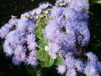 花の名前が分かりません。 どなたか分かる方、お願いします。