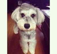 戸田恵梨香さんが 飼ってらっしゃる犬の犬種を 知りたいです! 調べてみたのですが、 はっきり分からなくて、  分かる方いらっしゃいましたら 教えて頂きたいです(>_<)