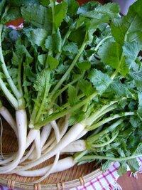 写真の大根菜の小さい大根の部分はどのような食べ方をすればよいのでしょうか?