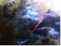 海水魚を飼っています。 水槽にゴカイのような生き物を発見しました。 これは何ですか?有害ですか? 教えてください。