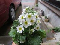 この花の 名前を 教えて下さいm(_ _)m  お手入れは ペンタスの様にすれば 良いのでしょうか?