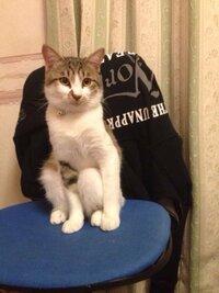うちの猫こんな座り型なんですけど、 大丈夫でしょうか?