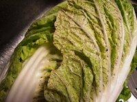 白菜の葉に斑点が あります。漬物を作ろうと思ってみたら 茎にではなく 葉に斑点が出てます。この症状も 「ゴマ症」なのでしょうか?食べても問題はないのでしょうか? よろしくお願いします。
