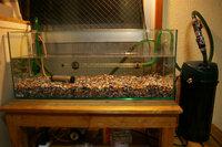 黒メダカ飼育について  本日、黒メダカ約60匹飼育用に、60x20x25cm水槽を立ち上げました。 ここに手を加えるとしたら、何が良いですか? ・GEX グラステリアスリム60(60x20x25cm,5mm厚) ・水心SSPP-2S+いぶき...