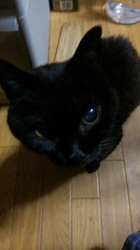 もう20歳ぐらいの猫がいなくなりました。痙攣も4回ぐらいおこってます。なぜいなくなったかわかるかた解答お願いします。やはり死ぬときはいなくなるのでしょうか
