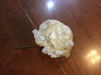 この薔薇を挿し木したいのですがやはり葉っぱがないと無理なのでしょうか? よろしくお願いします。