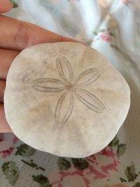 海で拾ったこれが何か、調べてもよくわかりません。くらげの化石かなにかでしょうか?