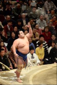 琴奨菊の日本人力士が何年ぶりに優勝は本当なのでしょうか?