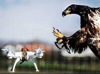 ドローン操縦者に質問じゃ  君たち、鷲にはどう立ち向かうんじゃ?