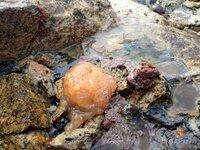 黄色っぽい石のようなものを海で見つけました。 はがそうとしても、硬くてはがれません。 硬さは石のようです。 これって何でしょうか?