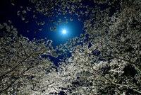 月が綺麗ですね・・・  女性からこう言われたら?