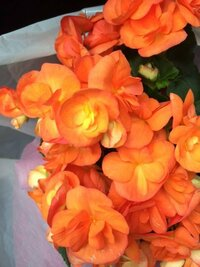 スミマセン。 無知なのに花を買ってしまいました。 花の名前がわかる方がいたら教えて頂けませんか? よろしくお願いします?