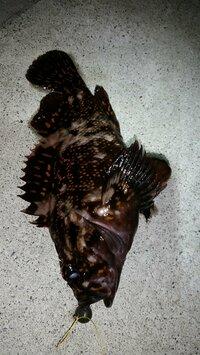 これはなんという魚ですか? オレンジの斑点がありました 見た目はソイですね