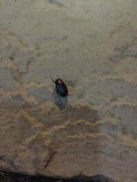 ナスの葉にいた、益虫ですか?どうやって判断しますか?害虫なら殺したいが、間違ったら後悔なります!