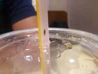この虫はなんですか? 頭の方は赤っぽくて胴体には縞模様のような物があります。 羽は1枚に見えました。
