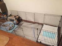 【至急!】柴犬♀3ヶ月のトイレトレーニングについて【500枚】」  昨日、ペットショップより柴犬♀3ヶ月を我が家に迎え入れました。 今まで室外犬の飼育の経験はありますが、今はマンション住まいですので完全...