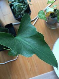 観葉植物の葉っぱに小さい黒い虫がたくさんついていました(; ̄O ̄) どうしたらいいでしょうか?良い薬とかあれば教えてください!!