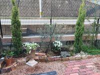 オリーブの木を地植えしてるのですが、元気がない(地植えして1年になりますが葉の色が悪く成長してない。でもそれ以上枯れてもいない。)ので正解かはわかりませんが有機石灰をまいてしまいました。 有機石灰より苦土石灰の方が良いとネットで見ました。有機石灰石灰の上から苦土石灰をまいてもいいのでしょうか?その他元気になるいい方法はありますか?  水やりは3日に1回程度、夏場は2日に1回程度 日当たりは抜...