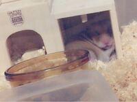 ハムスターが巣箱にえさをためて 巣箱の中でたべてるんですけど これってどんな理由がありますか?