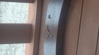 朝、庭にいたこの幼虫はなんの幼虫ですか?  虫博士お願いします。