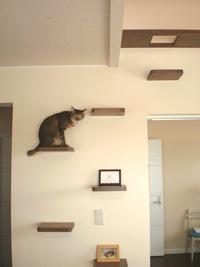木製のキャットタワーは猫がすべりませんか? 壁に木製の板を取り付けて、吹き抜けに猫階段を作ろうと思っています。 吹き抜けなのでそこそこ高さがあります。 家の猫はダッシュで思いっきり駆け上がるので、誤...