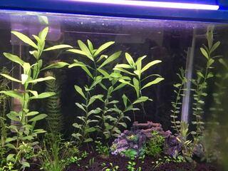 水草,アクアリウム,水面,手入れ,ピンチカット,上側,水上葉